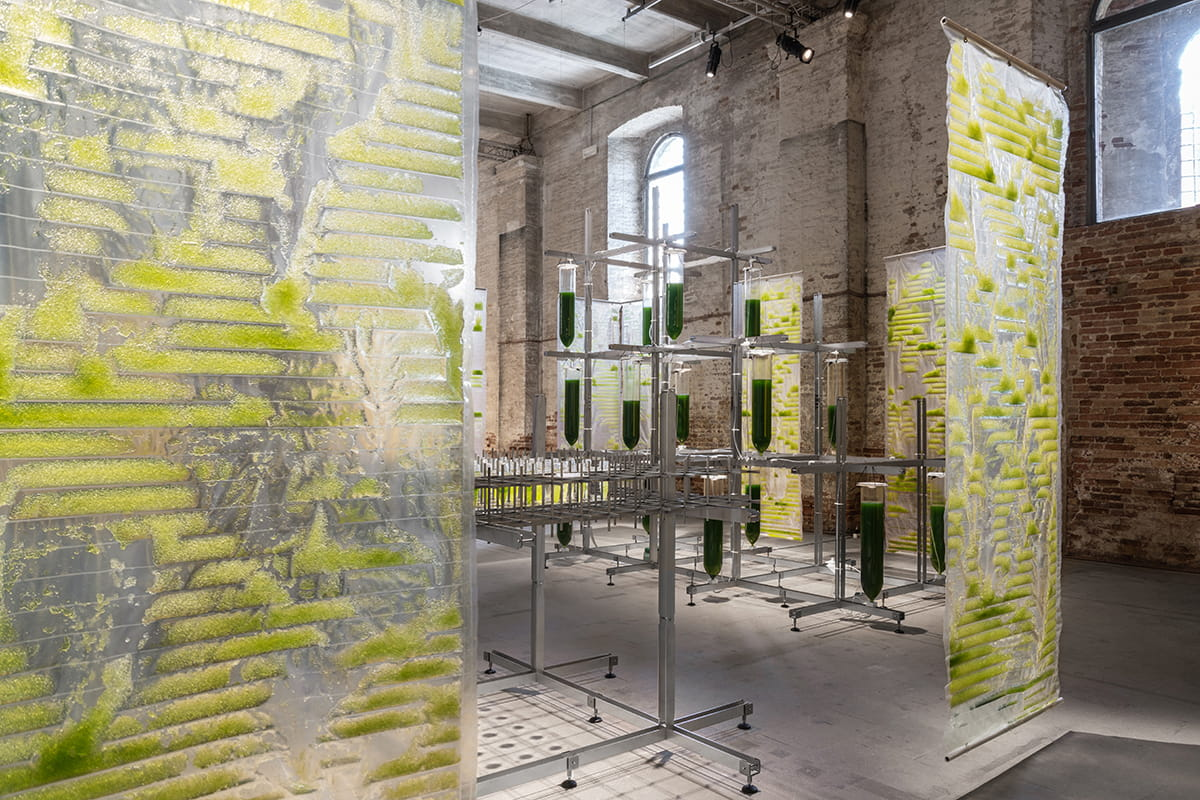 BIT.BIO.BOT exhibit at venice architecture biennale 2021